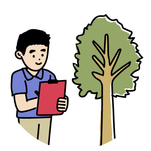 庭木の状態を確認しているイラスト